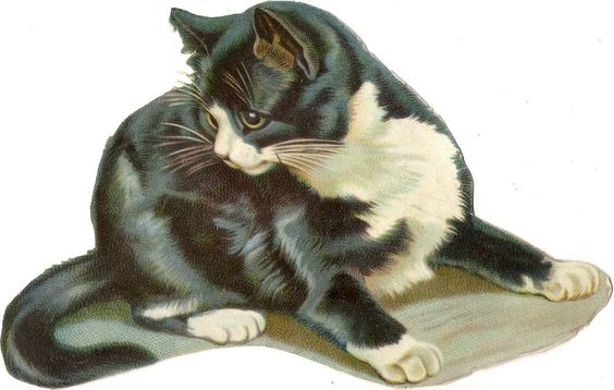 Oblaten Glanzbild scrap die cut chromo Katze  XL 18,5cm  cat kitten:
