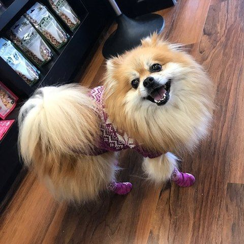 Cutecustomeralert Skylar Is Excited For Nationaldogweek And Her New Pink Nordic Sweater From Bailey Bella Pet Val With Images Nordic Sweater National Dog Week Pets