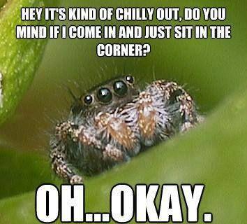 hehehe #spiders #pests