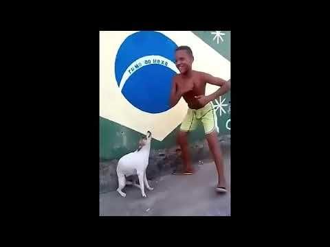 Perro Bailando Cancia N Del Nia O Que Hace Sonido De Perro Llorando Youtube Perro Bailando Ninos Bailando Perros