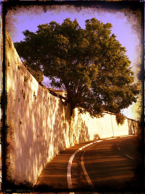 Árvore e Concreto