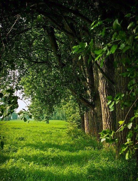 Foto Gambar Pemandangan Alam Kumpulan Gambar Pemandangan Terindah Di Dunia Pemandangan Alam Gunung Hutan Pohon Pal Di 2020 Pemandangan Lanskap Fotografi Pemandangan