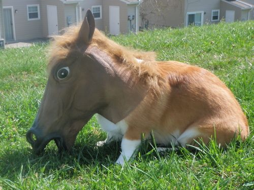 Corgi wearing a horse-head.  Why is this so amusing???: Ridiculous Corgi, Funnyanimals Petbucket, Funny Animal, Dogs Funnydogs, Corgi Dogs, Doggie Laughs, Funnydogs Funnypets