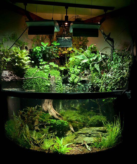 Emergent plants aquarium wow i would love to have this for Aquarium waterfall decoration