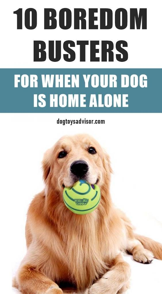 10 Ways To Keep Your Dog Busy When Home Alone Dogs Dog Boredom Buster Dog Boredom