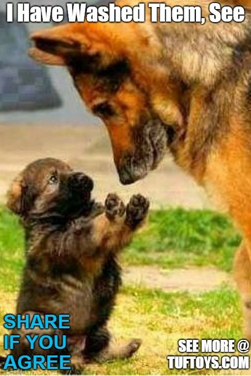 Clean Funny Dog Memes 2019 Dog Meme Face Cute Dog Memes Dog Memes Best Dog Memes Funny Dog Memes Funny Animal Me Dog Puns Funny Animal Pictures Easy Dog Treats