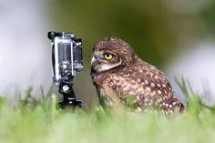 Kautz Dicht genug für ein Selfie?