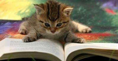Felinus bibliothecus, chat de charme pour bibliophiles