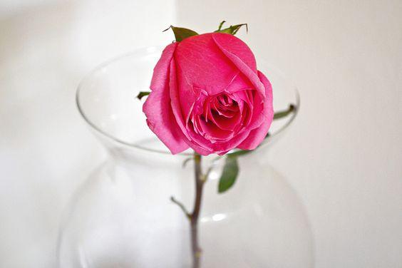 Rose by My Digital Diaries
