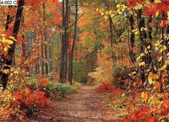 Woodland wall murals autumn forest photo wall mural for Autumn forest mural