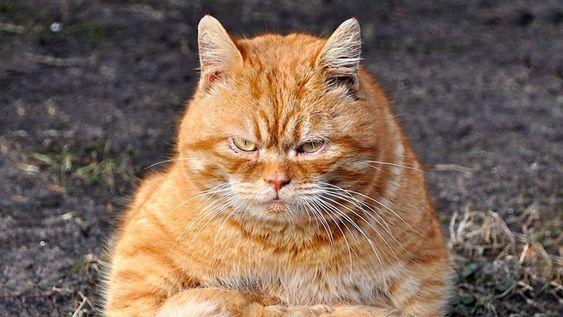 Desperate Oklahoma Moms Plea For Orange Garfield Like Cat To Borrow Goes Viral Orange Cats Cat Health Problems Cat Diseases