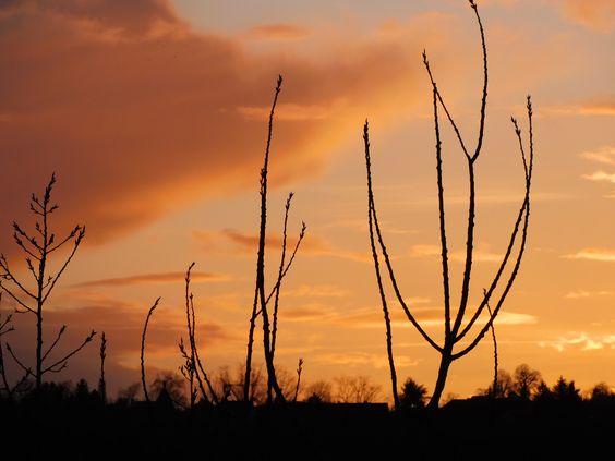 Eine lichtvolle Zeit zeigt sich schon am Horizont ...