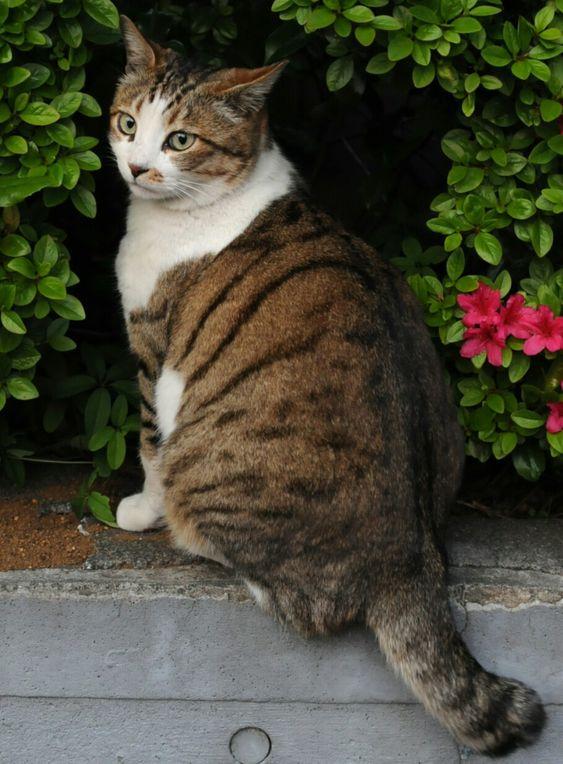 Leafpool White Tabby Cat Tabby Cat Names Tabby Cat