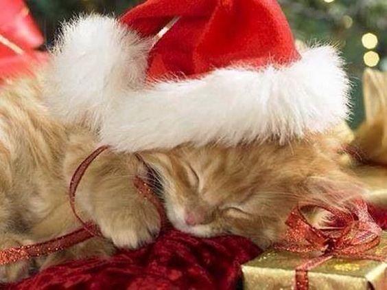 Adorable Cute Christmas Kitten Sleeping: