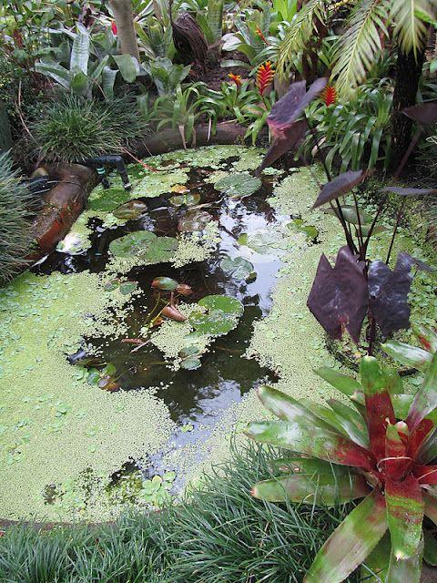 Japie's garden. Capetown, South Africa.
