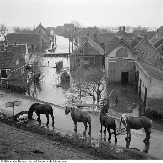 I didn't see a traslation for this, obviously here was a flood & the lead horse is smelling what looks like a dead cow. Sad. 1953.  Ed van der Elsken: