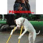 hahaha quem conhece o trabalho do Encantador de Cães entenderá