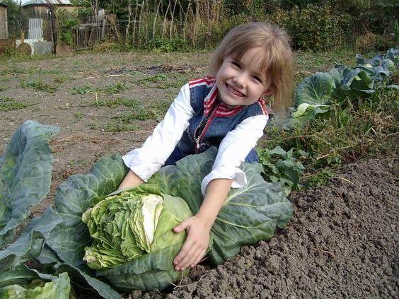 Появилась дача, загородный дом и захотелось своих овощей, вкусных свежих, только с грядки. Но вот беда. Со временем урожай на грядках снижается, вкус его изменяется (морковь не сладкая, свекла как т…