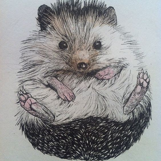 Instagram photo by @biddythehedgehog via ink361.com | Art ...