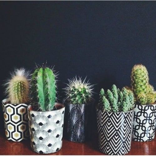 Benefits Of Having Plants In Your Home Office Working From Home Insider Plants Cactus Decor Cactus