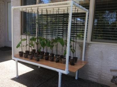 Plant Stands Pvc Pipes And Pipes On Pinterest