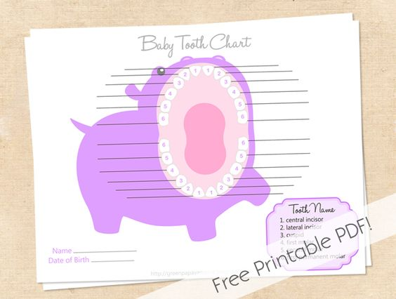 Free Printable Baby Tooth Chart  Nuture    Tooth Chart