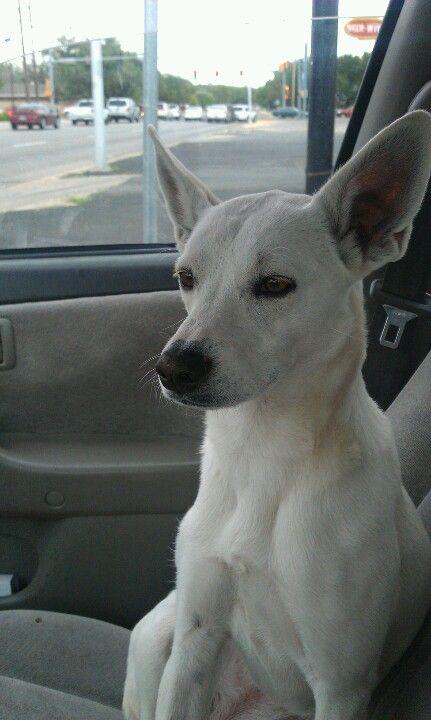Bella loves car rides ^_^