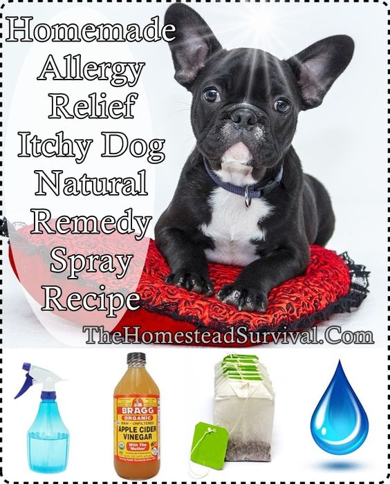 Allergies, Homemade And Itchy Dog On Pinterest