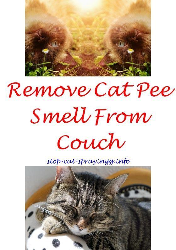 Remove Cat Urine Odor