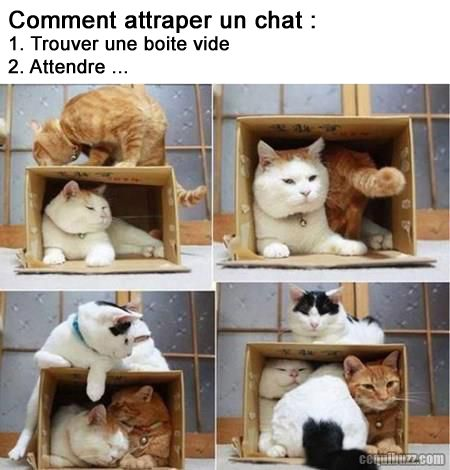 Comment attraper un chat