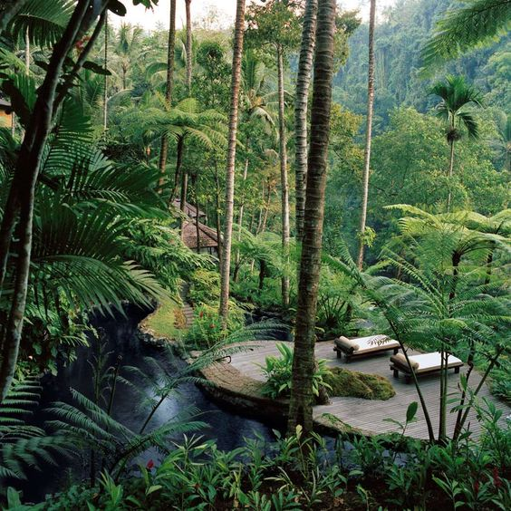 Dejemos que la naturaleza se desarrolle y sólo ayúemos a que coja forma. Entonces tendremos un auténtico Jardín de Edén - Jardines Colgantes Ubud (Bali, Indonesia):