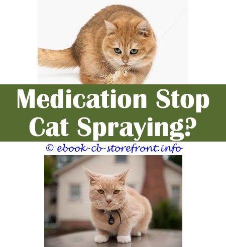 neutered cat spraying blood
