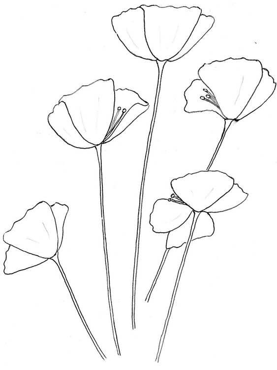 poppy outline drawing - Google Search | Shapes | Pinterest | Warfare ...