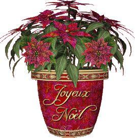 Joyeux Noël Christmas Poinsettia