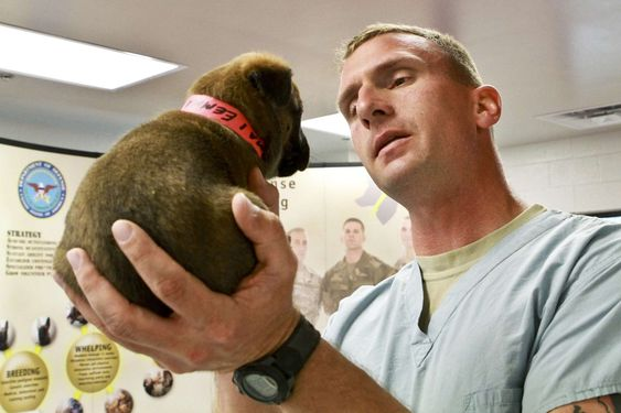 #canine #care #checkup #cute #doctor #dog #examination #fur #hand #health #male #man #medical #puppy #vet #veterinarian