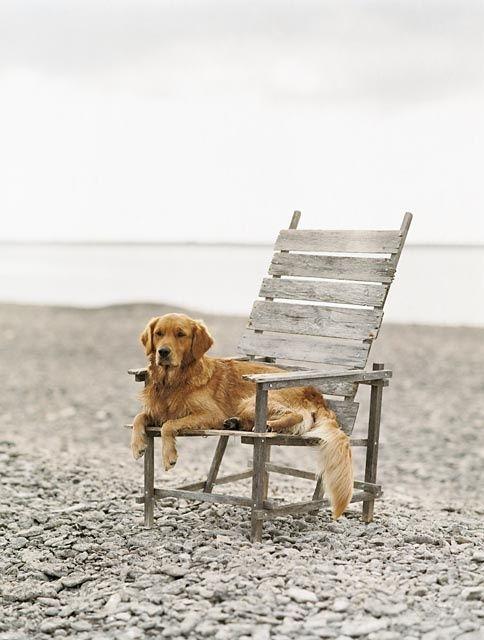 浜辺の椅子に座るおしゃれでかっこいい犬の壁紙