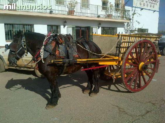 MIL ANUNCIOS.COM - Varas carro. Compra venta de caballos varas carro. Anuncios con fotos de caballos. Comprar un caballo. Todas las razas de caballos.