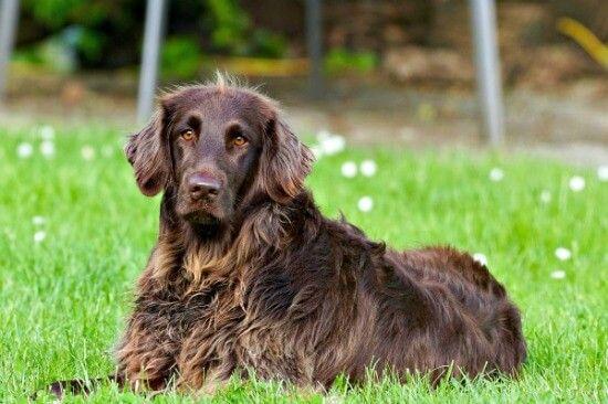 Essential Dog Training Commands Training Your Dog Dog Training