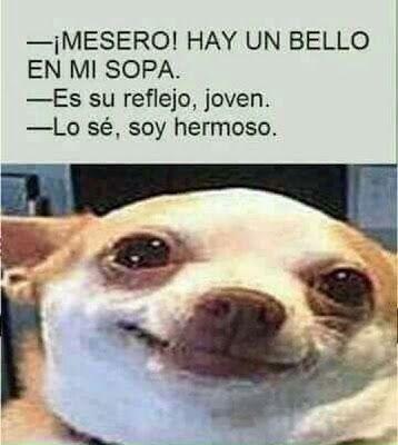 Whatveo Cuando Nadie Me Ve Puedo Ser O No Ser Memes Memes Divertidos Memes Comicos