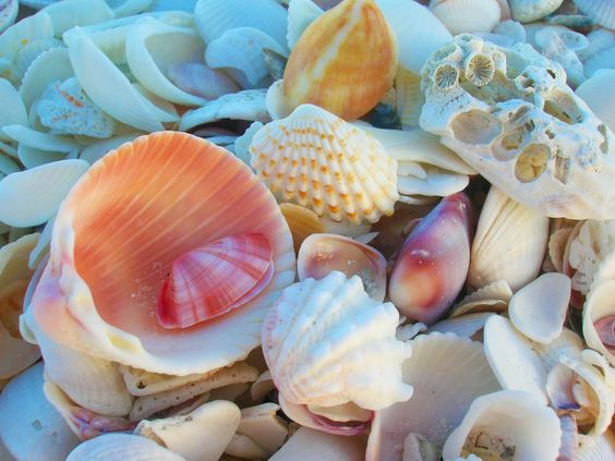 <3My favorite thing to do at the beach look for shells and sharks teeth!