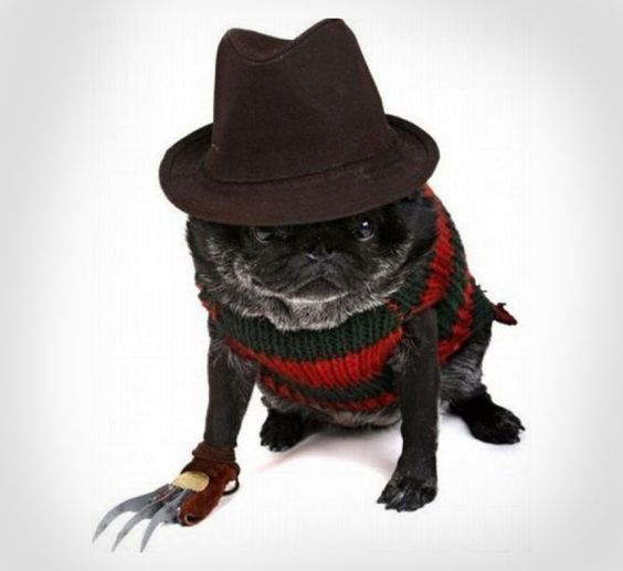 It's getting to be that time of year again when your main goal in life is to make your dog look as stupid as possible. I think this Nightmare on Elm Street Freddy Krueger Costume for your dog might do...