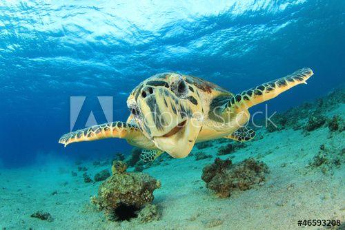 Credence De Cuisine En Verre Imprime Bestsellers Hawksbill Sea Turtle Tortue De Mer Tortue Verre Imprime