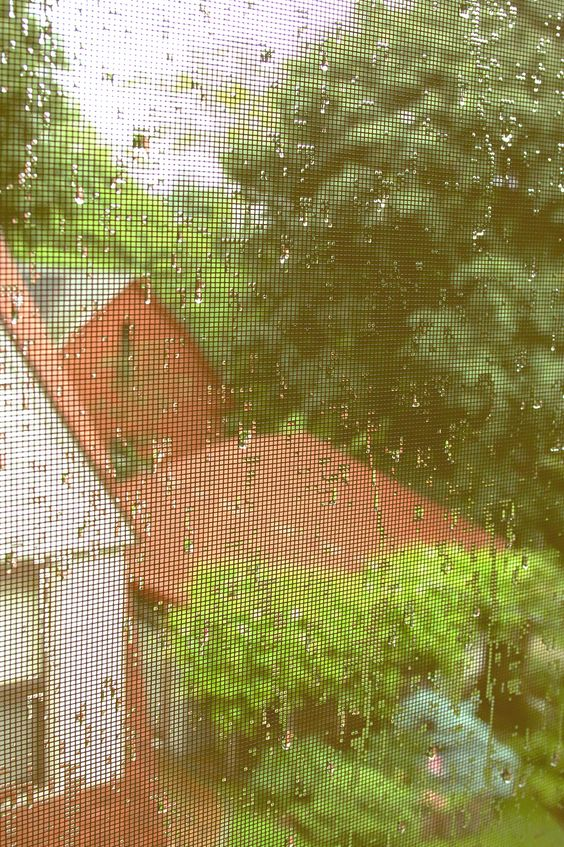 After the rain on  a summer's day in New England.