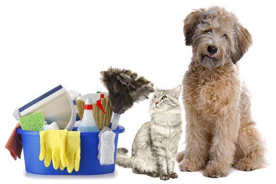CÃES! GATOS! COMO EFETUAR A HIGIENIZAÇÃO DO AMBIENTE!  A Higienização de forma correta do ambiente onde vivem nossos pets trará BEM ESTAR...  BLOG Canil Pedra de Guaratiba Artigos http://pet-eshop.blogspot.com.br/2011/04/higiente-do-ambiente-manejo.html #blogcanilpedradeguaratibaartigos #canilpedradeguaratibaartigosherbalvet #canilpedradeguaratibaartigosmanejo #caesgatoslimpezadoambiente #comolimparoxixidoseucachorro #dicasparaseucao #dicasparaseucachorro