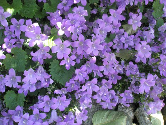 Lovely in lavender!