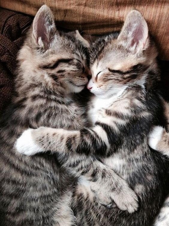 15 Photos Of Cute Tiny Kittens Cuddling With Each Other Kittens Cutest Kittens Pets