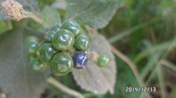 futuras semillas