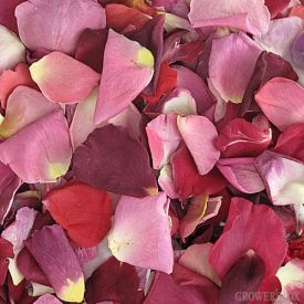 Freeze Dried Rose Petals have increased exponentially in popularity over the past few years. Their increased popularity can probably be attributed to the fact that they cost less, last longer and are easier to care for than fresh rose petals. Rose petals are an affordable way to warm up and add variety to wedding venues. Available in a wide variety of different colors, freeze dried rose petals look great alongside bouquets and other arrangements of wedding flowers.