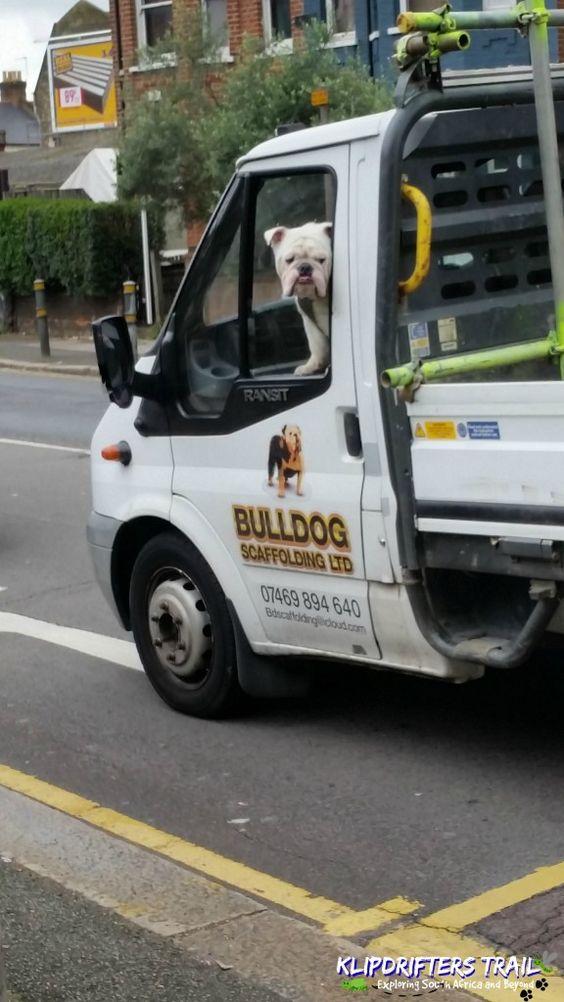 Bulldog Scaffolding in Truck