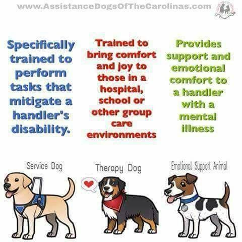 Service Dogs Image By Cyndy Dent Brooks Fetty On Pet Info